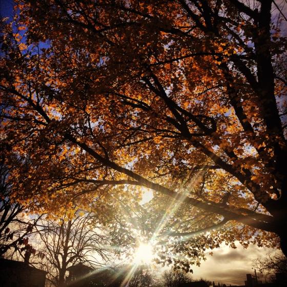 Crisp, sunny fall day in Portland