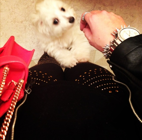 Studded gold leggings, Mochi, and a bright Zara bag (perfect combo)