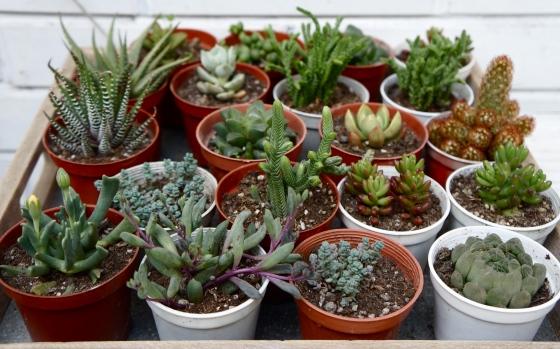 zen plants at tian zi fang